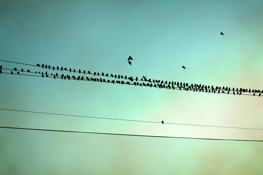 Dot Birds