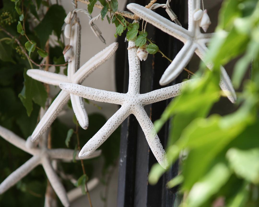 starfishlr-be41